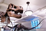 Museum of Natural History - Fossil Halls